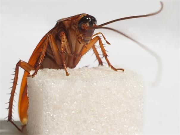 Большие коричневые насекомые