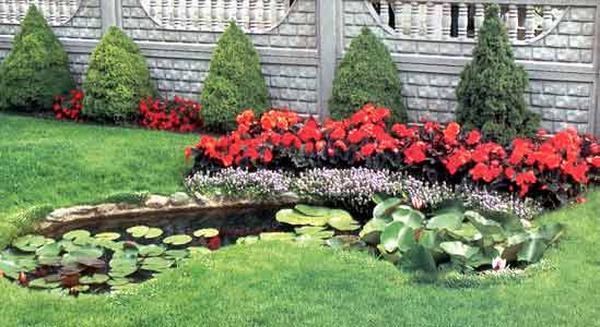 Как украсить ваш сад декоративными растениями