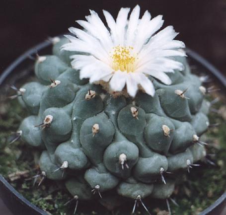 kak-peresazhivat-kaktusy-qwesa.ru-02