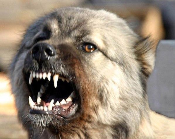 Как диагностировать бешенство у собаки