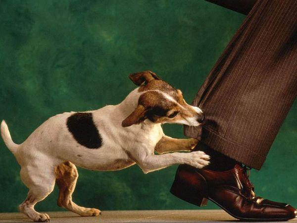 Как лечить раны от укуса собаки