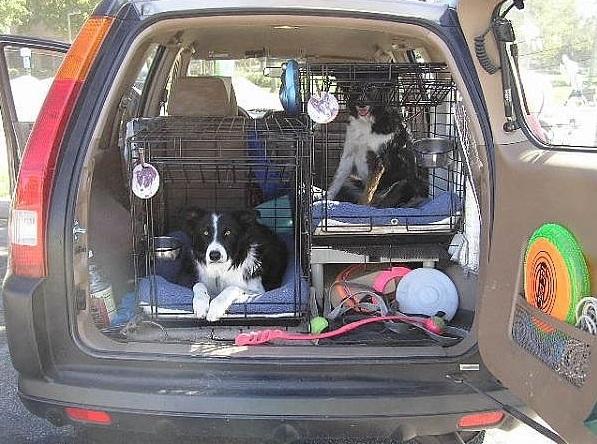 Как перевозить собак или кошек безопасно в автомобиле