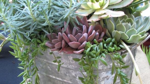 Как создать миниатюрный сад в контейнере