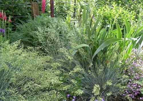 Какие травы универсальные для любого сада