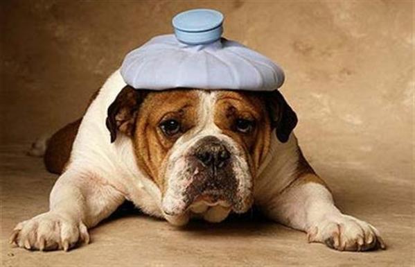 Признаки того, что собака больна или испытывает боль