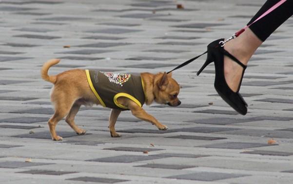 Как защитить свою собаку от беды