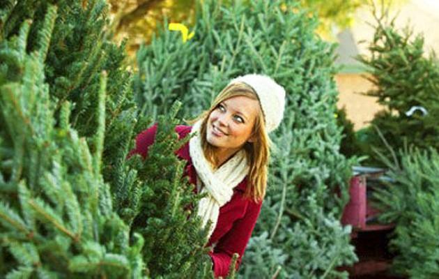 Как правильно купить и сохранить свежей новогоднюю елку