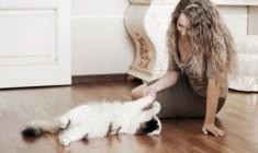 Какая порода кошек идеально подходит для квартиры